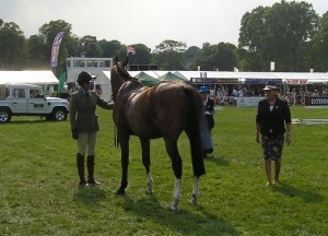 Make sure you've practiced standing your horse up square for the conformation judge and trotting up in-hand.