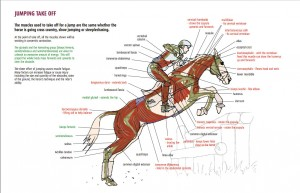 The relevant page from Kirsty's book, showing exactly which muscles are in use during take-off