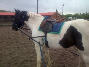 The first position I use for long-reining - alongside the horse