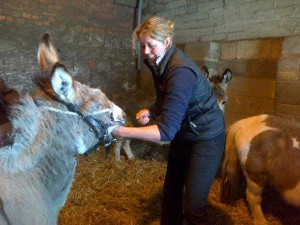 The story of my life - not only a donkey but also a Shetland and then another donkey.