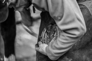 Ask your farrier to teach you how to remove a shoe. Photo ©Katie Mortimore