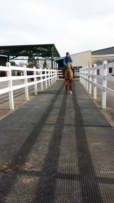 Watching a horse trot up
