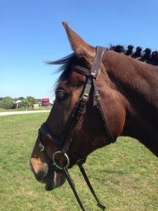 With the flash noseband