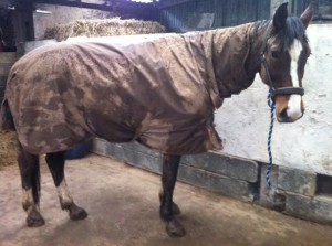 Yep mares love to stay clean really they do!