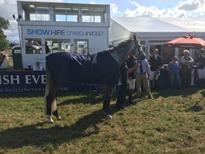 Winning Intermediate horse Luxury FH