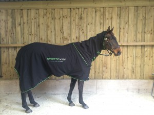 The Large Sportzvibe on a 15.1 horse - a bit long but totally workable.