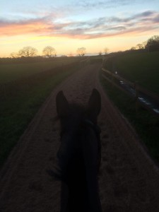 Enjoying the new gallops
