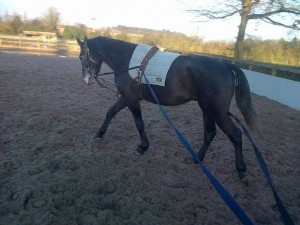 An early morning lunging session.