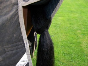 Snazzy tail-flap loop, and wipe-clean fillet string.