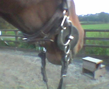 When the reins are not in action the bit sits correctly when the mouthpiece is at the bottom on the ring. curb strap is also not in action at this point.