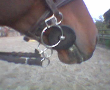 Photo of correctly fitted gag (main rein removed to clearly show angle & curb)