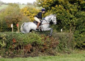 Goodbye photogenic grey horse